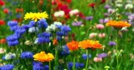 Blumen gießen wenn man im Urlaub ist