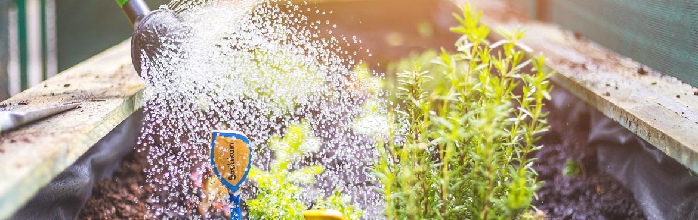Hochbeet gießen und bewässern