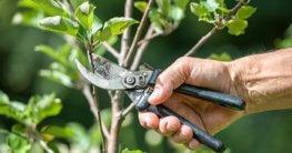 Welche Gartenschere für welchen Zweck