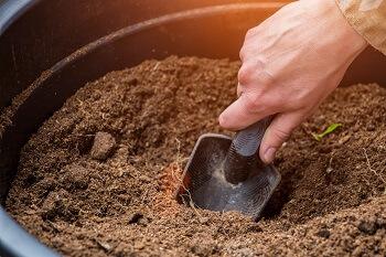 Sandigen Boden verbessern