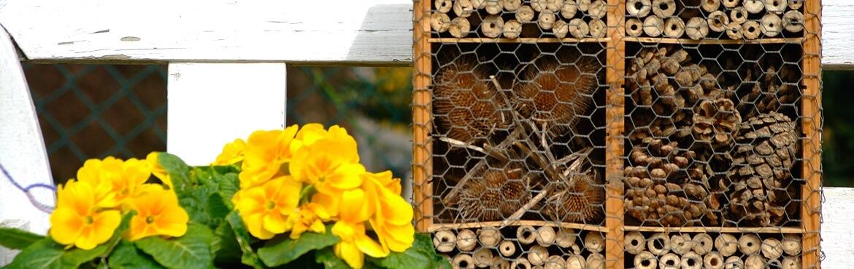 Wo sollte man ein Insektenhotel aufstellen